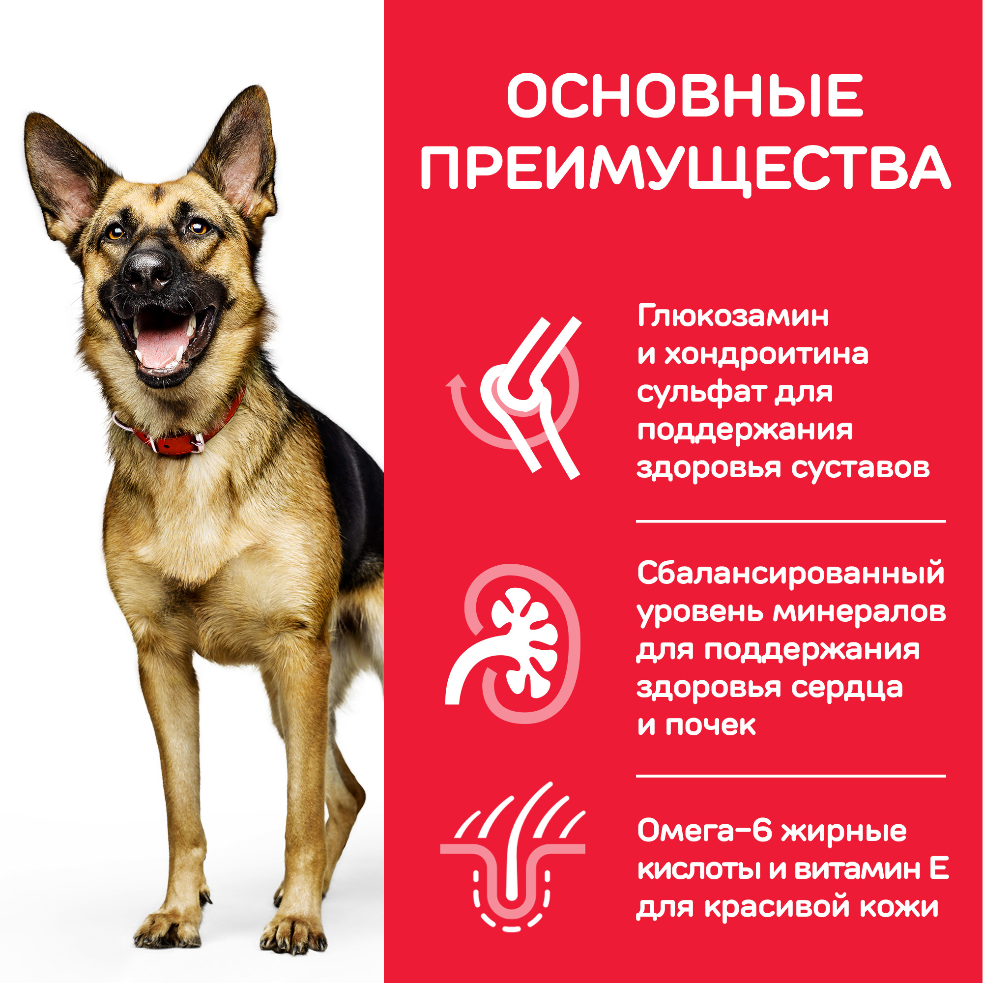 Hills Science Plan™ Canine Mature Adult 5+ Active Longevity™ Large Breed with Chicken, курица, для стареющих собак крупных пород 12кг. Фото N7