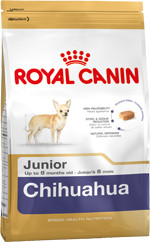RC Chihuahua Junior
