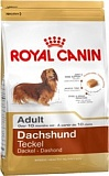 RC Dachshund Adult